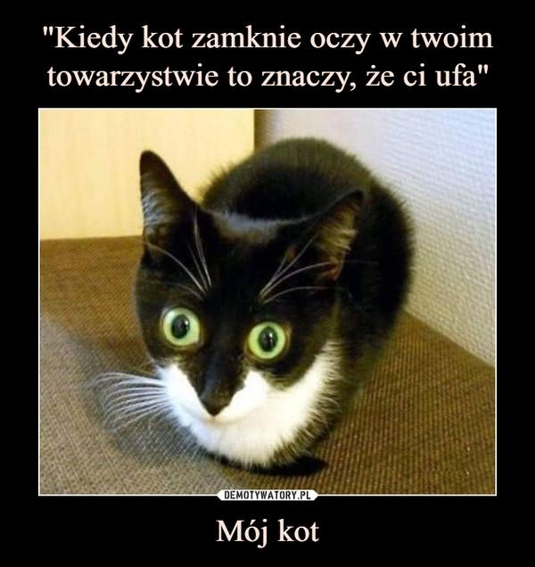 Mój kot –