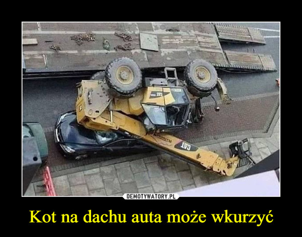 Kot na dachu auta może wkurzyć –