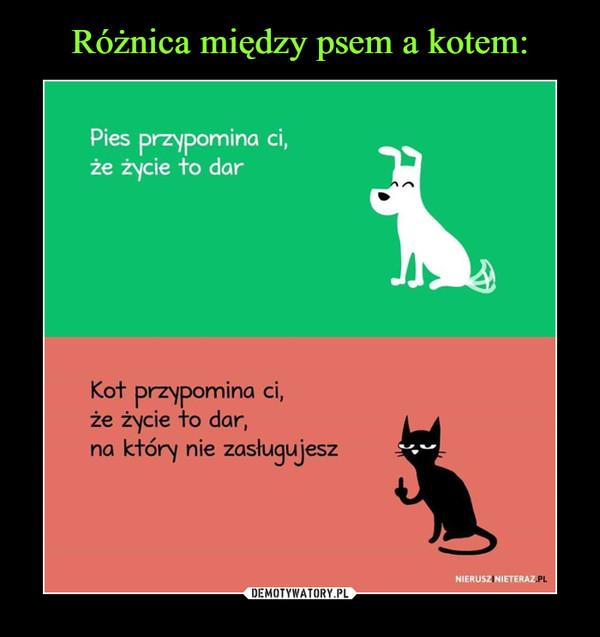 –  Pies przypomina ci, że życie to dar Kot przypomina ci, że życie to dar, na który nie zasługujesz