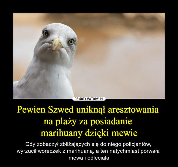 Pewien Szwed uniknął aresztowania na plaży za posiadanie marihuany dzięki mewie – Gdy zobaczył zbliżających się do niego policjantów, wyrzucił woreczek z marihuaną, a ten natychmiast porwała mewa i odleciała