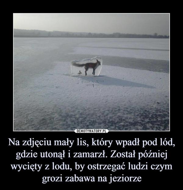 Na zdjęciu mały lis, który wpadł pod lód, gdzie utonął i zamarzł. Został później wycięty z lodu, by ostrzegać ludzi czym grozi zabawa na jeziorze –
