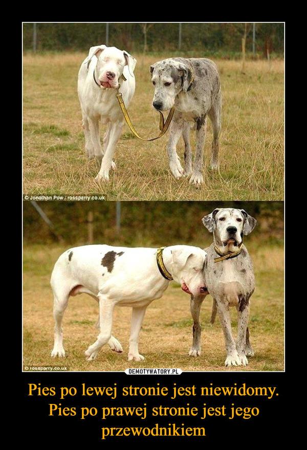 Pies po lewej stronie jest niewidomy. Pies po prawej stronie jest jego przewodnikiem –