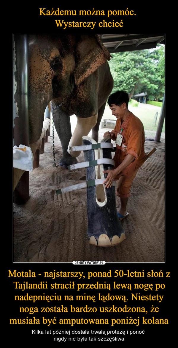 Motala - najstarszy, ponad 50-letni słoń z Tajlandii stracił przednią lewą nogę po nadepnięciu na minę lądową. Niestety noga została bardzo uszkodzona, że musiała być amputowana poniżej kolana – Kilka lat później dostała trwałą protezę i ponoć nigdy nie była tak szczęśliwa