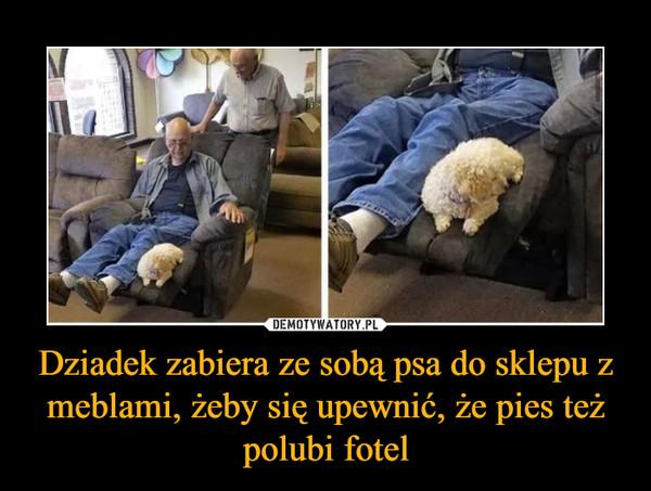 Dziadek zabiera ze sobą psa do sklepu z meblami, żeby się upewnić, że pies też polubi fotel –