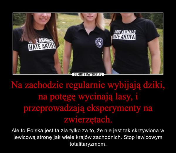 Na zachodzie regularnie wybijają dziki, na potęgę wycinają lasy, i przeprowadzają eksperymenty na zwierzętach. – Ale to Polska jest ta zła tylko za to, że nie jest tak skrzywiona w lewicową stronę jak wiele krajów zachodnich. Stop lewicowym totalitaryzmom.