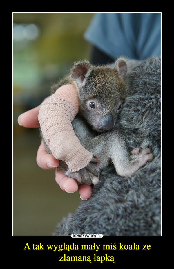 A tak wygląda mały miś koala ze złamaną łapką –