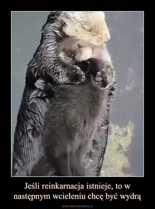 Jeśli reinkarnacja istnieje, to w następnym wcieleniu chcę być wydrą –