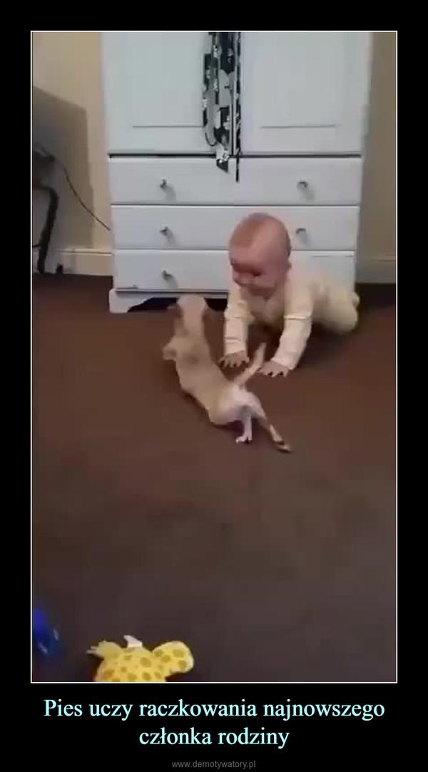 Pies uczy raczkowania najnowszego członka rodziny –
