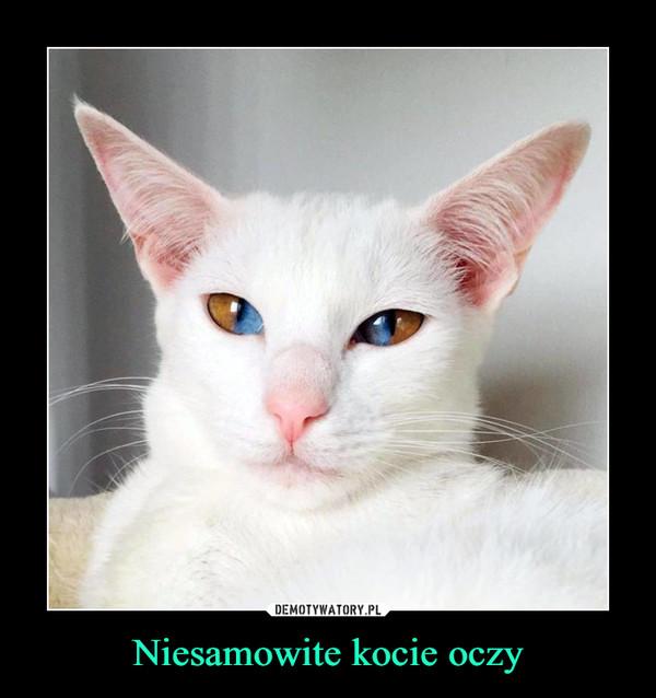 Niesamowite kocie oczy –