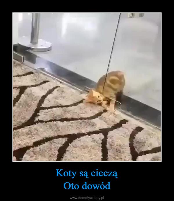 Koty są ciecząOto dowód –