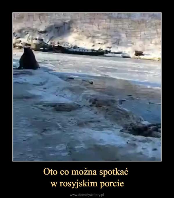 Oto co można spotkać w rosyjskim porcie –