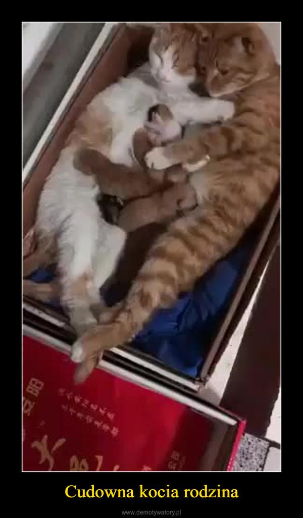 Cudowna kocia rodzina –