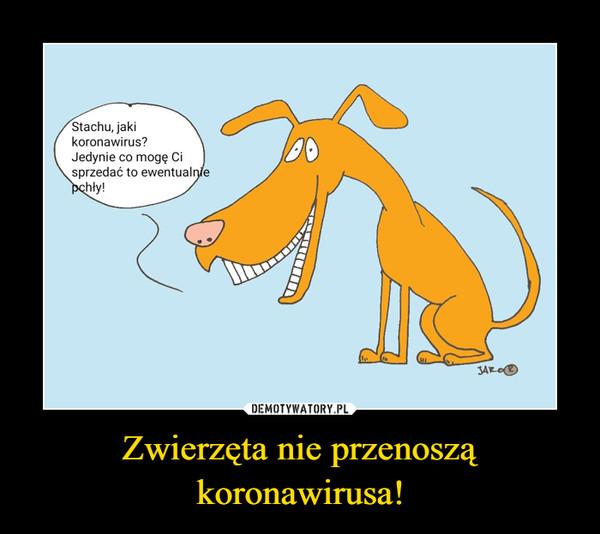 Zwierzęta nie przenoszą koronawirusa! –  Stachu, jakikoronawirus?Jedynie co mogę Cisprzedać to ewentualniepchły!JAROO