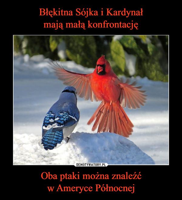 Oba ptaki można znaleźćw Ameryce Północnej –