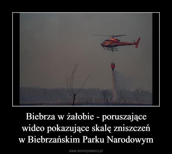 Biebrza w żałobie - poruszającewideo pokazujące skalę zniszczeńw Biebrzańskim Parku Narodowym –