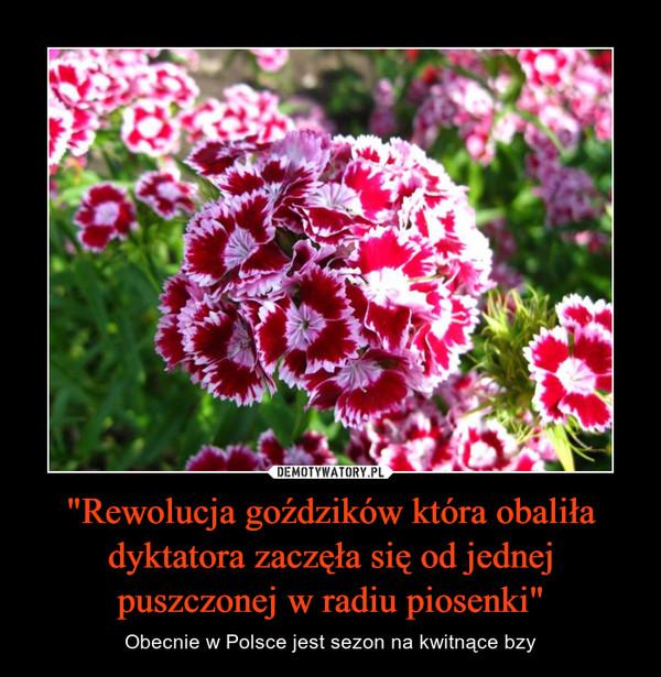 """""""Rewolucja goździków która obaliła dyktatora zaczęła się od jednej puszczonej w radiu piosenki"""" – Obecnie w Polsce jest sezon na kwitnące bzy"""