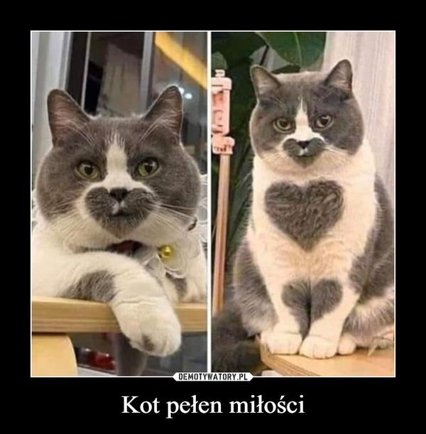 Kot pełen miłości –