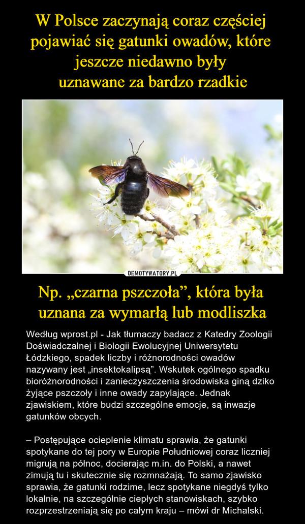 """Np. """"czarna pszczoła"""", która była uznana za wymarłą lub modliszka – Według wprost.pl - Jak tłumaczy badacz z Katedry Zoologii Doświadczalnej i Biologii Ewolucyjnej Uniwersytetu Łódzkiego, spadek liczby i różnorodności owadów nazywany jest """"insektokalipsą"""". Wskutek ogólnego spadku bioróżnorodności i zanieczyszczenia środowiska giną dziko żyjące pszczoły i inne owady zapylające. Jednak zjawiskiem, które budzi szczególne emocje, są inwazje gatunków obcych.– Postępujące ocieplenie klimatu sprawia, że gatunki spotykane do tej pory w Europie Południowej coraz liczniej migrują na północ, docierając m.in. do Polski, a nawet zimują tu i skutecznie się rozmnażają. To samo zjawisko sprawia, że gatunki rodzime, lecz spotykane niegdyś tylko lokalnie, na szczególnie ciepłych stanowiskach, szybko rozprzestrzeniają się po całym kraju – mówi dr Michalski."""