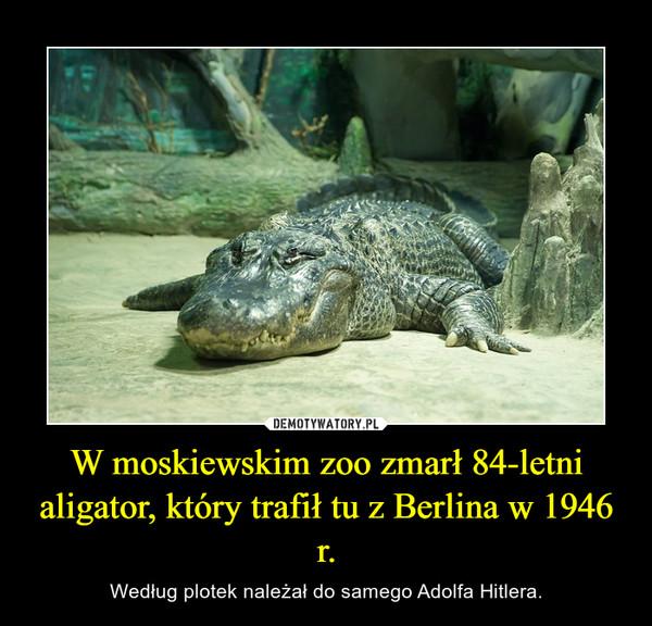 W moskiewskim zoo zmarł 84-letni aligator, który trafił tu z Berlina w 1946 r. – Według plotek należał do samego Adolfa Hitlera.