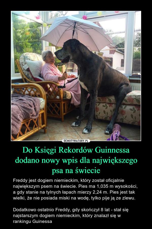 Do Księgi Rekordów Guinnessa dodano nowy wpis dla największego psa na świecie