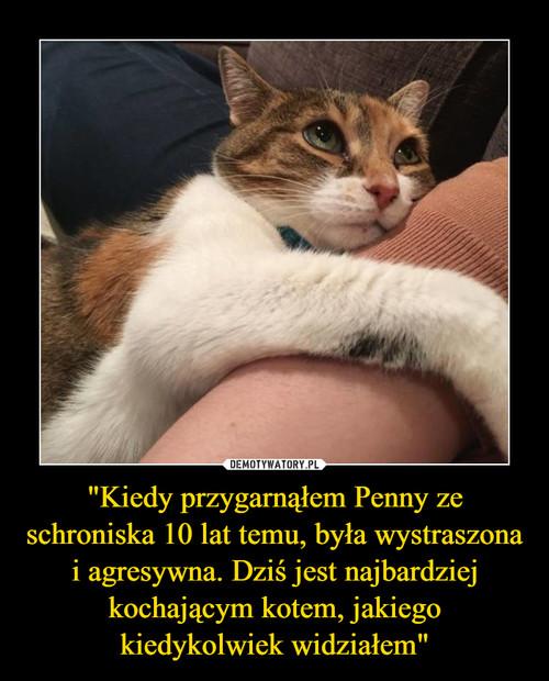 """""""Kiedy przygarnąłem Penny ze schroniska 10 lat temu, była wystraszona i agresywna. Dziś jest najbardziej kochającym kotem, jakiego kiedykolwiek widziałem"""""""