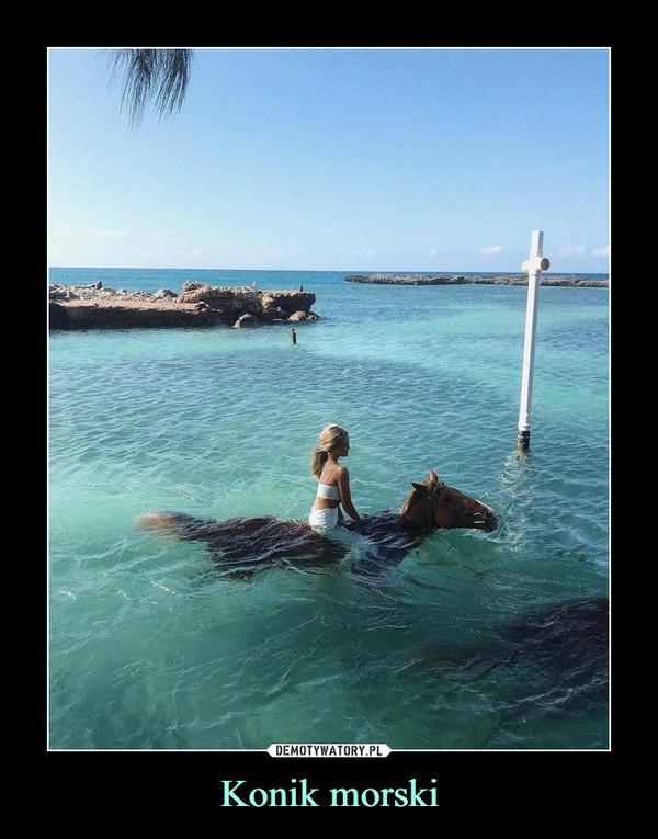 Konik morski –