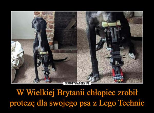 W Wielkiej Brytanii chłopiec zrobił protezę dla swojego psa z Lego Technic –