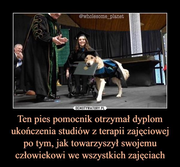 Ten pies pomocnik otrzymał dyplom ukończenia studiów z terapii zajęciowej po tym, jak towarzyszył swojemu człowiekowi we wszystkich zajęciach –
