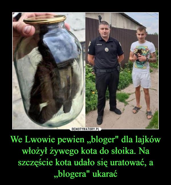 """We Lwowie pewien """"bloger"""" dla lajków włożył żywego kota do słoika. Na szczęście kota udało się uratować, a """"blogera"""" ukarać –"""