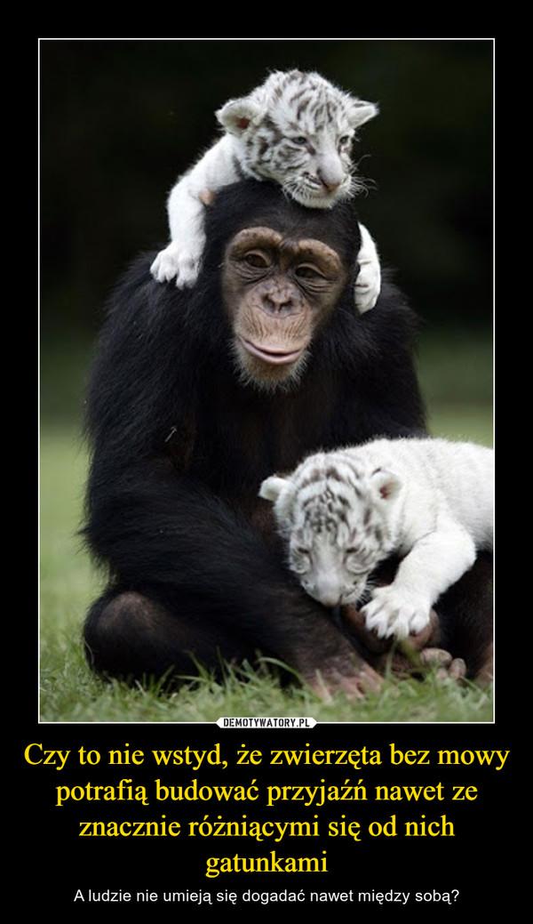 Czy to nie wstyd, że zwierzęta bez mowy potrafią budować przyjaźń nawet ze znacznie różniącymi się od nich gatunkami – A ludzie nie umieją się dogadać nawet między sobą?