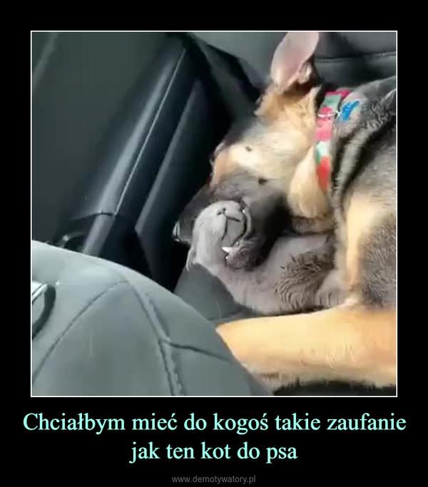 Chciałbym mieć do kogoś takie zaufanie jak ten kot do psa –