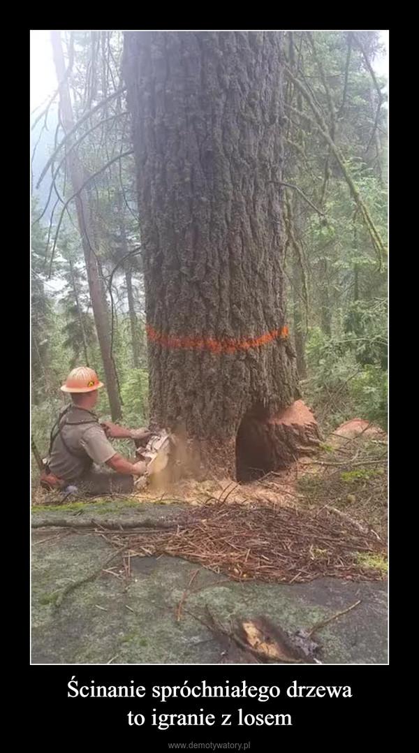 Ścinanie spróchniałego drzewato igranie z losem –