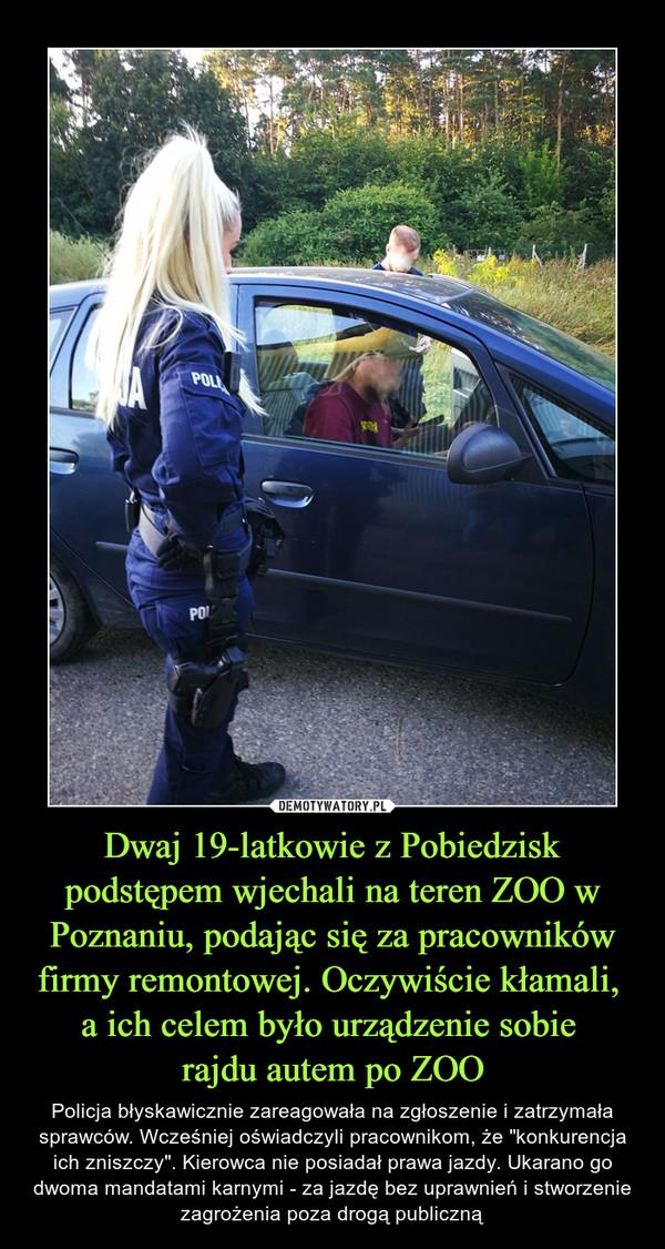 """Dwaj 19-latkowie z Pobiedzisk podstępem wjechali na teren ZOO w Poznaniu, podając się za pracowników firmy remontowej. Oczywiście kłamali, a ich celem było urządzenie sobie rajdu autem po ZOO – Policja błyskawicznie zareagowała na zgłoszenie i zatrzymała sprawców. Wcześniej oświadczyli pracownikom, że """"konkurencja ich zniszczy"""". Kierowca nie posiadał prawa jazdy. Ukarano go dwoma mandatami karnymi - za jazdę bez uprawnień i stworzenie zagrożenia poza drogą publiczną"""