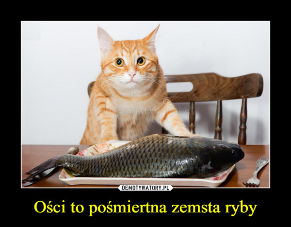 Ości to pośmiertna zemsta ryby –