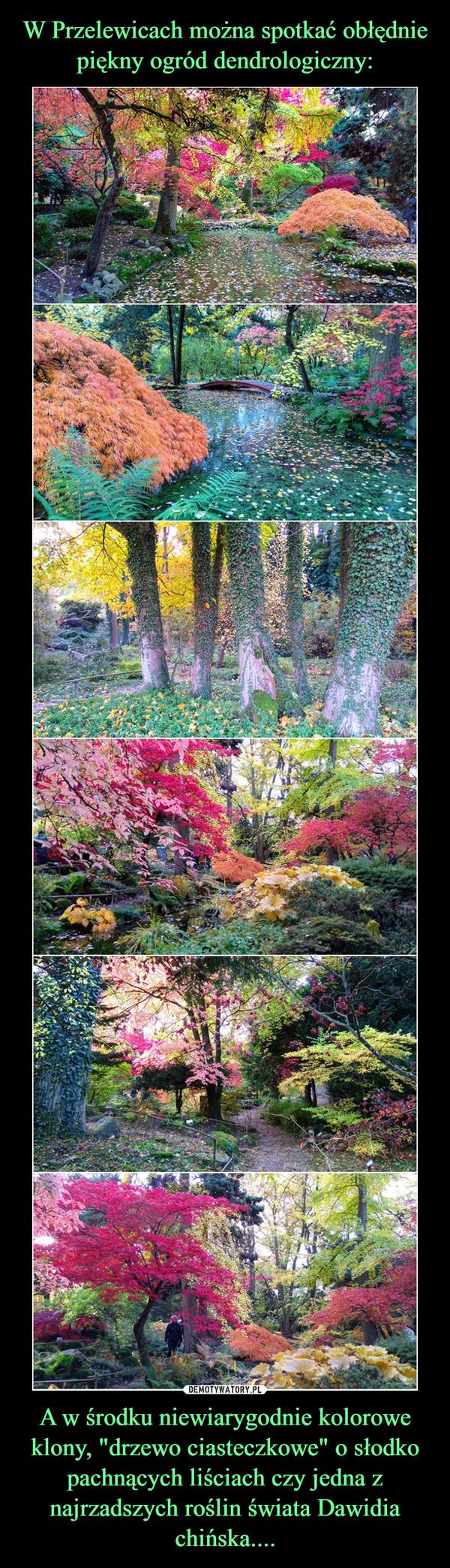 """A w środku niewiarygodnie kolorowe klony, """"drzewo ciasteczkowe"""" o słodko pachnących liściach czy jedna z najrzadszych roślin świata Dawidia chińska.... –"""