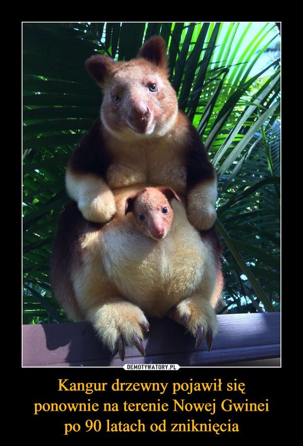 Kangur drzewny pojawił sięponownie na terenie Nowej Gwineipo 90 latach od zniknięcia –
