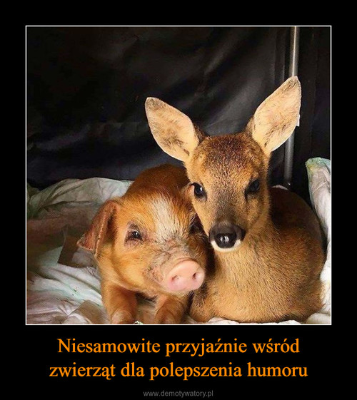 Niesamowite przyjaźnie wśród zwierząt dla polepszenia humoru