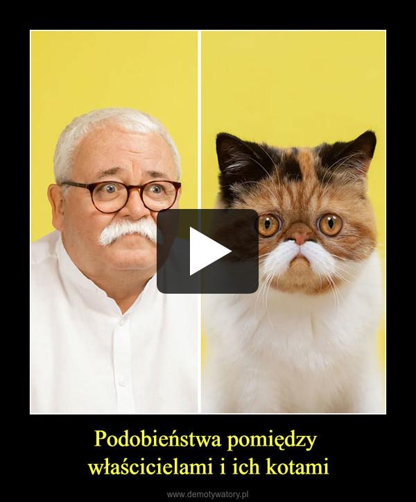 Podobieństwa pomiędzy właścicielami i ich kotami –