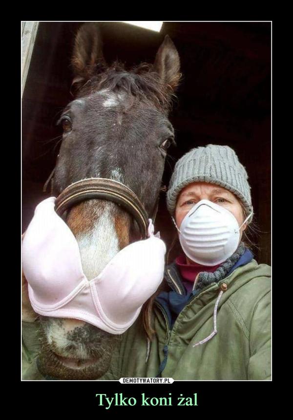 Tylko koni żal –
