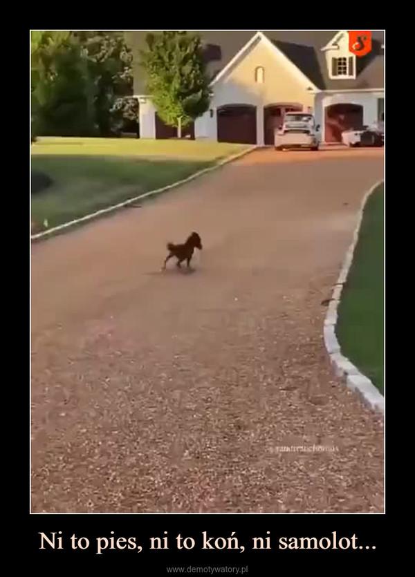 Ni to pies, ni to koń, ni samolot... –