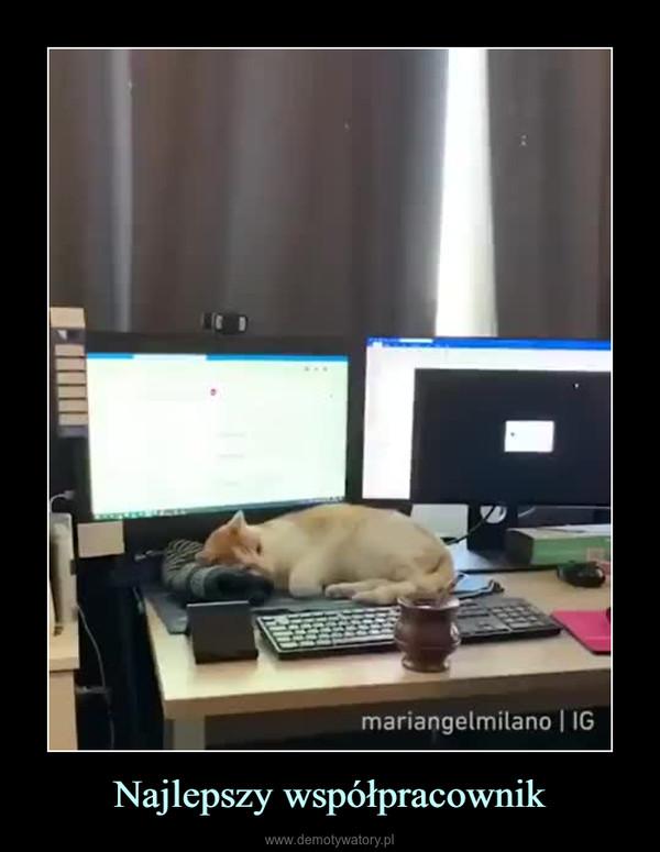 Najlepszy współpracownik –