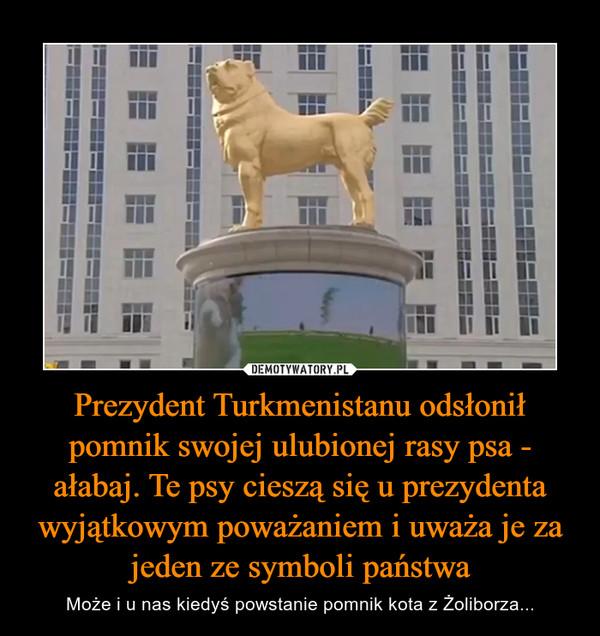 Prezydent Turkmenistanu odsłonił pomnik swojej ulubionej rasy psa - ałabaj. Te psy cieszą się u prezydenta wyjątkowym poważaniem i uważa je za jeden ze symboli państwa – Może i u nas kiedyś powstanie pomnik kota z Żoliborza...