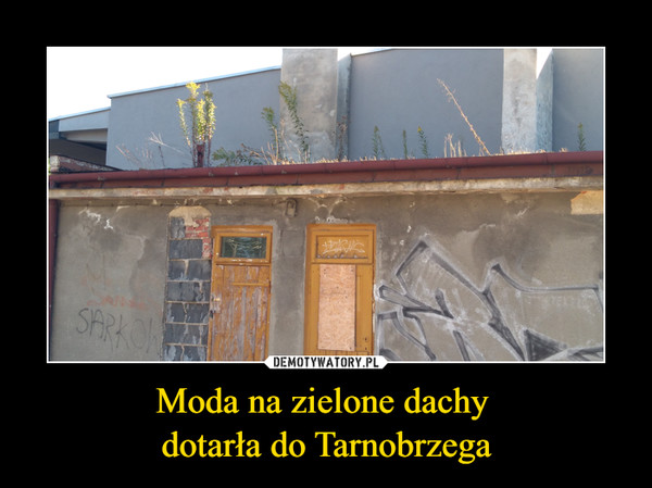 Moda na zielone dachy  dotarła do Tarnobrzega