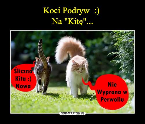 """Koci Podryw  :)  Na """"Kitę""""..."""