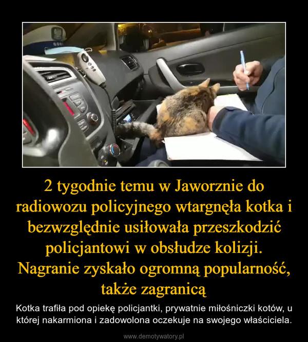 2 tygodnie temu w Jaworznie do radiowozu policyjnego wtargnęła kotka i bezwzględnie usiłowała przeszkodzić policjantowi w obsłudze kolizji. Nagranie zyskało ogromną popularność, także zagranicą – Kotka trafiła pod opiekę policjantki, prywatnie miłośniczki kotów, u której nakarmiona i zadowolona oczekuje na swojego właściciela.