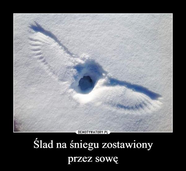 Ślad na śniegu zostawionyprzez sowę –