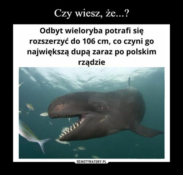 –  Odbyt wieloryba potrafi się rozszerzyć do 106 cm, co czyni go największą dupą zaraz po polskim rządzie