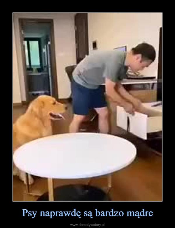 Psy naprawdę są bardzo mądre –