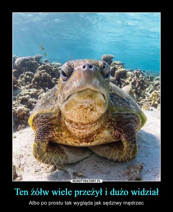 Ten żółw wiele przeżył i dużo widział – Albo po prostu tak wygląda jak sędziwy mędrzec