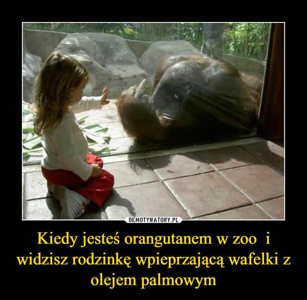 Kiedy jesteś orangutanem w zoo  i widzisz rodzinkę wpieprzającą wafelki z olejem palmowym –